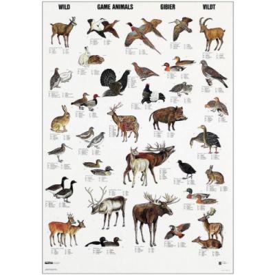 Plakatikomplekt `Liigid`, 70 x 100 cm, 6 plakatit komplektis