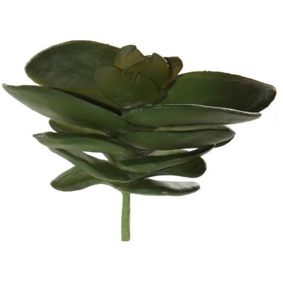 Succulent potis, h 16-17cm