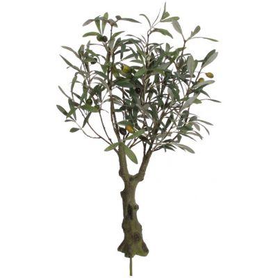 Oliiv potis M, h 64cm