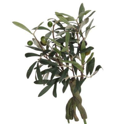 Oliiv potis S, h 32cm