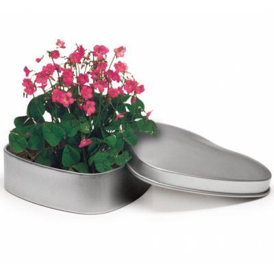 Corthogreen Südamekujuline karp mulla ja lilleseemnetega