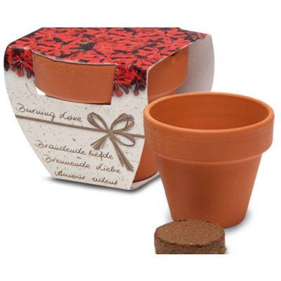Lillepott mulla ja seemnetega (Loitev tulinelk) Corthogreen